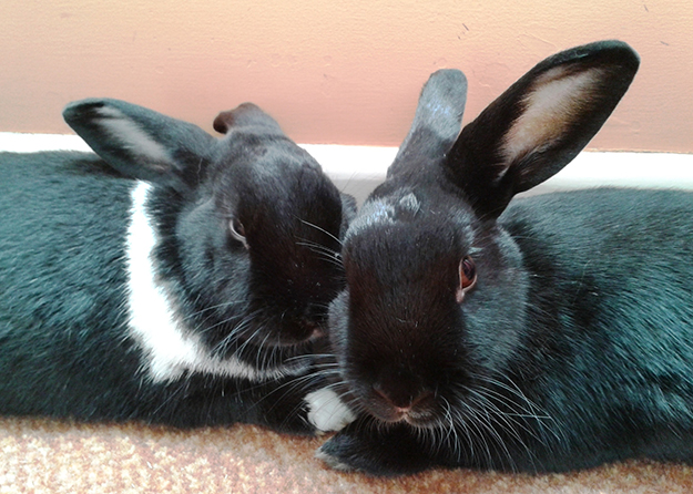 We are Esther and Romain -- a bonded pair of buns